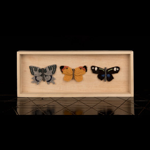 Butterflies, box, set of three