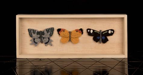3 Schmetterlinge im Schaukasten